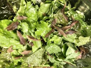 Chicken Caesar-Style Salad w/ Shortcut 03